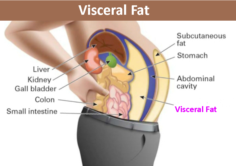 visceral-fat.png
